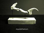 Aquilatherium talon by hyrotrioskjan