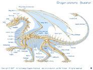 Dragonskel