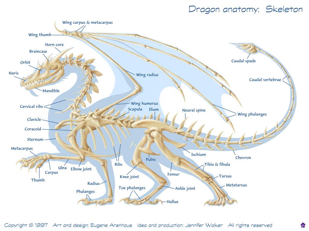 Europäischer Drache | Drachen Wiki | FANDOM powered by Wikia
