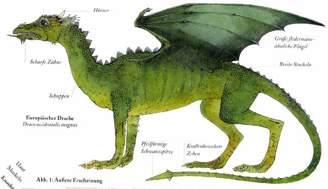 Westliche Drachen | Drachen Wiki | FANDOM powered by Wikia
