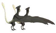 Ascialophoraptor sexual dimorphism