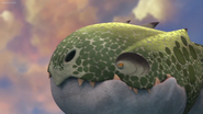 Schattenflügler Kopf