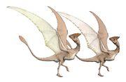 Daulophoraptor sexual dimorphism