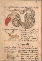 Al-miraj and Serpent