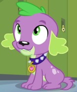 Spike My Little Pony Hund
