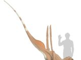 Indoraptor navigare