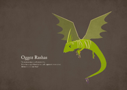 Oggez Rashas