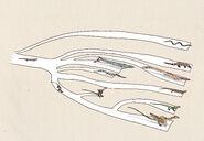 Basic phylogeny of dragons by hyrotrioskjan