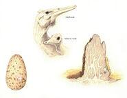 Corytholurus nesting behavior by hyrotrioskjan