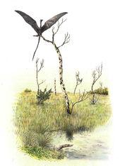 Umbragrus swamp by hyrotrioskjan