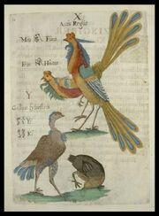 Flora Sinensis - Avis Regia Feng Huang und Huhn