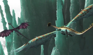 Kettenschwanz fliegend