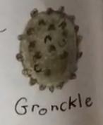 Gronckel Ei Buch