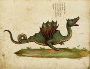 Draco aethiopicus