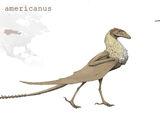 Iubadraco americanus