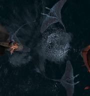 Schrecken der Meere DZLG2