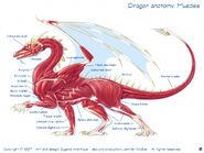 Dragonmusc