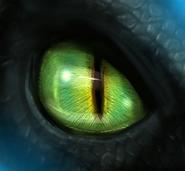 Nachtschatten Auge