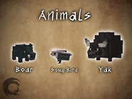 Animals Showcase