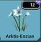 Arktis Enzian
