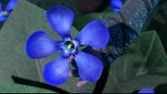 Die Drachenblume