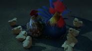 Hühnchen Immer auf der Suche