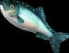 SoD Fisch Hering