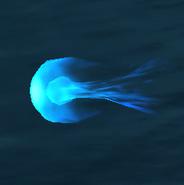 Wollgeheul Feuer