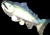 SoD Fisch Lachs