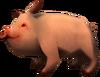 SoD Tier Schwein