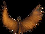 Körpertypen von Drachen