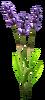 SoD Produkt Lavendel