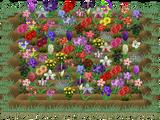 Valentine's Gardening - 2014