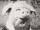 Grimace avatar.png