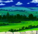 Wyż Grass