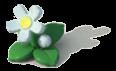 100px-Decoration - White Flower