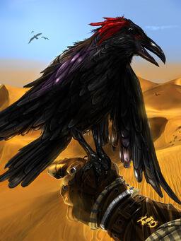 Raven flattened Tenda