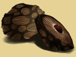 Gyundi Nut Small