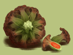 Stone Fig