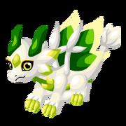 White Lotus Juvenile