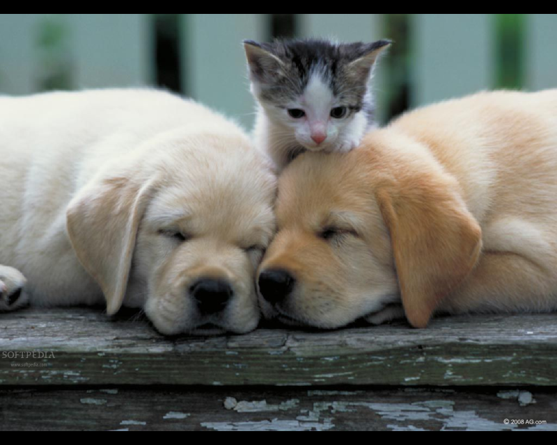 Image - Puppies And kittens Picture253-1-.png | Dragon ...