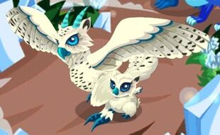 Hedwig+Snowball