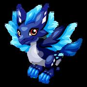 Star Lorikeet Juvenile