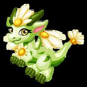 Bright Daisy Juvenile