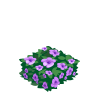Purple Hedge