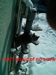E3dc6f39-snow