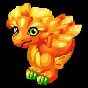 Marigold Adult