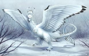 Snowy dragon by draggincat-da05don