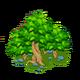 Large Timberwood