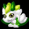 Galanthus Baby
